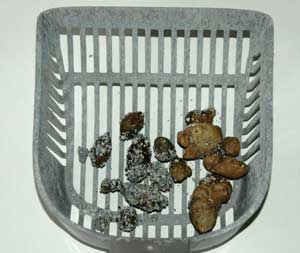 Worms In Cats Poo